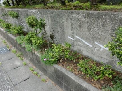 化粧コンクリート色合わせ復元工法の施工前