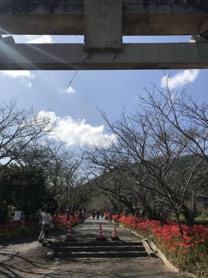 彼岸花が咲いている鰐鳴八幡宮