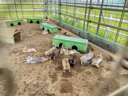 クールダウン中のウサギ