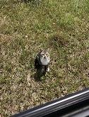 こちらを見る猫3