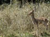 お庭リフォームの現場への道すがらであった野生の鹿