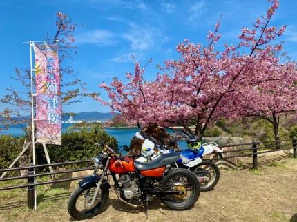 FTR223と桜