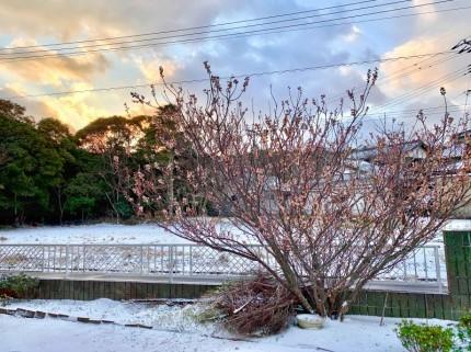 さくらんぼの木2