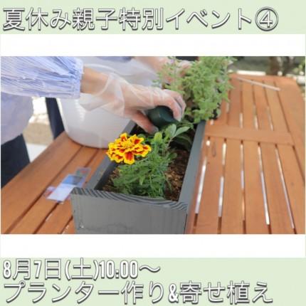 プランターと寄せ植え